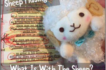 Sheep The Eccentric Sheep Musings