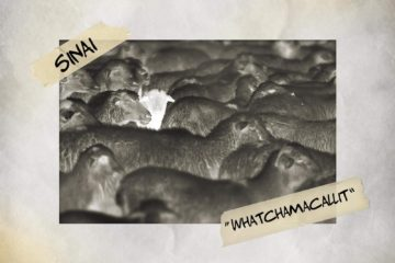 Sinai Releases WHATCHAMACALLIT Single